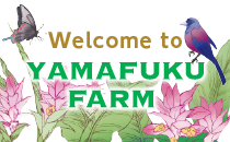 welcome to yamafuku farm